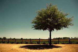 40 Naturally Beautiful Photos of Trees   PSDFan