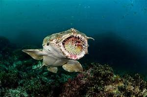 The Best Shark Dive in the World!: Wobbegong and Spiny Puffer!