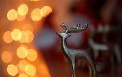 Christmas Reindeer Lights Wallpapers Desktop Deer Computer