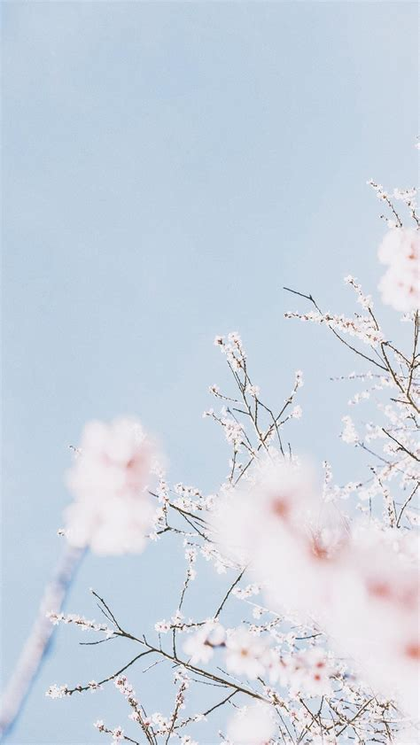 aesthetic pastel wallpapers