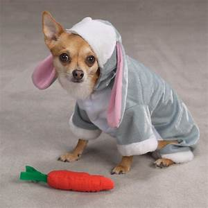 bunny rabbit costume for dogszack zoey
