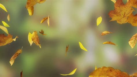 Falling Leaves Wallpaper Animated - falling autumn leaves backgrounds loopable stock footage
