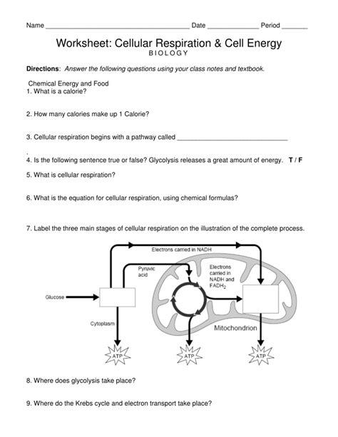 worksheet glycolysis worksheet grass fedjp worksheet