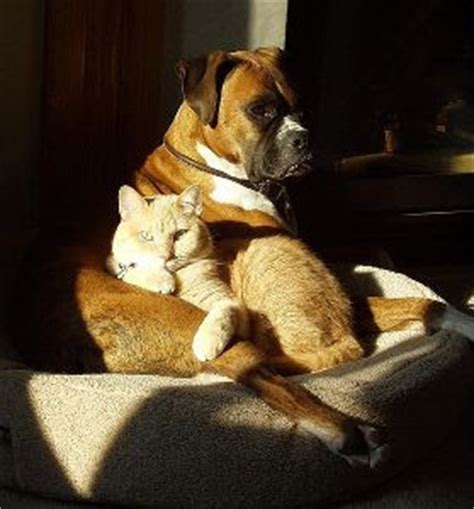 best for cat owners responsible pet ownership blog the best dog breeds for cat owners