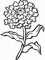 Pages Coloring Flower Marigold Flowers Printable Marigolds sketch template