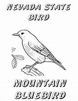 Coloring Nevada Bird Bluebird Pages State Printable Birds Flag Sagebrush Mountain Mountains Sierra Windy Sheet Themed Flower Clipart Clip Outline sketch template