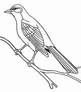 Mockingbird Cuckoo Coloring Bird Pages Drawing Bahama Guira Northern Birds Draw Drawings Emerald Printable Print Coloringsky Getdrawings 82kb 684px sketch template