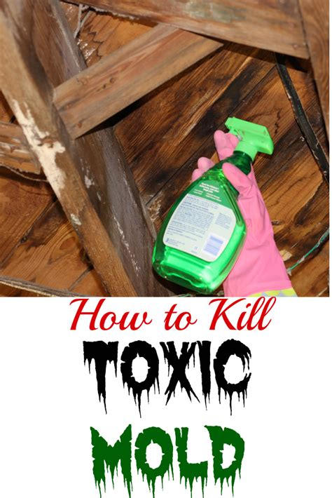 How To Clean Mold And How To Clean How To Clean Mold The Unextreme
