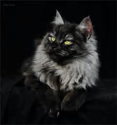Chat Noir | Cats | Pinterest