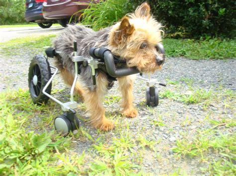 eddies wheels  pets  pet mobility experts conway