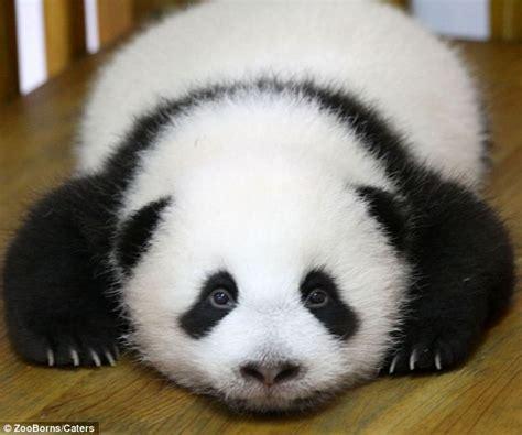 graciosos bebes de animales en peligro de extincion