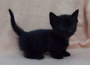 Black Kitten Pictures, Photos, and Images for Facebook ...