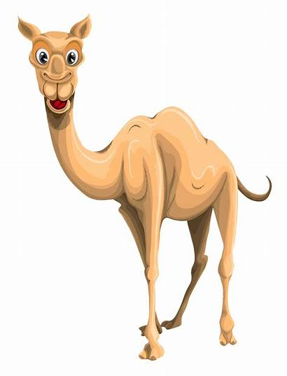 Camel Vector Transparent Cartoon Clipart Resolution Pngpix