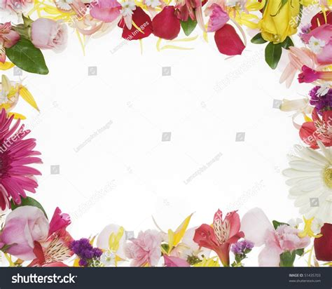 flower border  white background stock photo