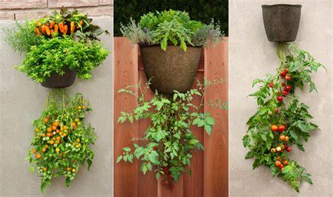 patio tomato planter hanging tomato planter garden365