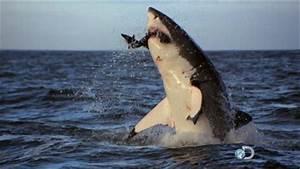 Christmas Day Piranha Attack Injures More Than 60 at Beach ...