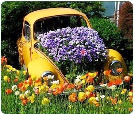 growing flowers organically grow flowers  shrubs