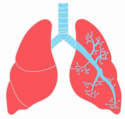 Lungs Lung Transparent Clipart Clip N10 Comptia