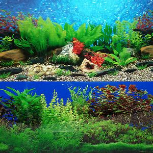 fish tank background  sided river bed