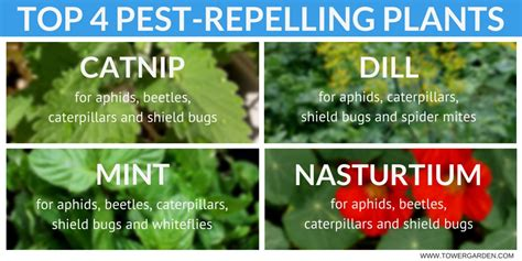 pest repellent plants the ultimate guide to garden pest control