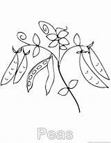 Peas Coloring sketch template