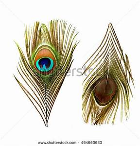 Beautiful Exotic Peacock Feathers On White Stock Photo ...