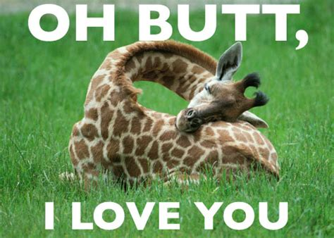 Giraffe Spider Meme - funny giraffe pictures images graphics comments scraps 24 pictures graphics99 com