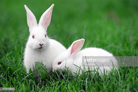 Rabbit Images Rabbit Stock Photos And Pictures Getty Images