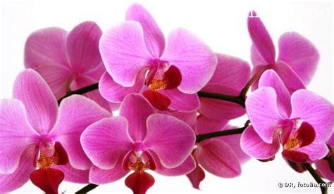 entretien d une orchid 233 e la t 234 te dans les nuages