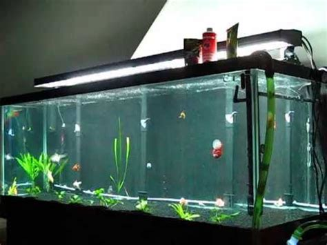 The 180 Goldfish Tank Updated and Finished - YouTube