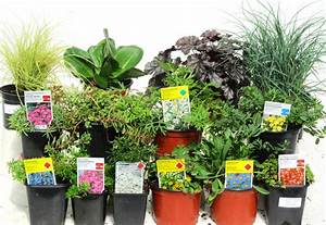 Blühende Pflanzen Winterhart : pflanzen set f r steing rten ca 5 m pflanzen versand ~ Michelbontemps.com Haus und Dekorationen
