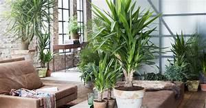 Yucca Abschneiden Und Vermehren Mein Schner Garten
