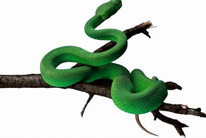 Clipart Snake Shadow Transparent Animal Forest Football