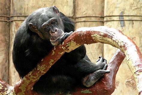 Tierschutzwidrige Haltung im Krefelder Zoo muss beendet ...