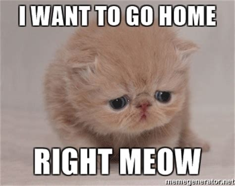 Go Home Meme - i want to go home right meow super sad cat meme generator
