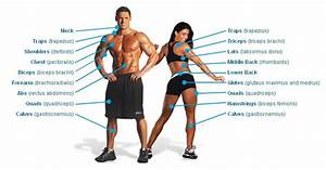 Exercises For Muscle Groups  Major Muscle Groups