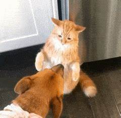funny cat GIFs Search | Find, Make & Share Gfycat GIFs
