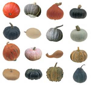 Varieties Of Pumpkins In Australia by Switzerland Justhungry