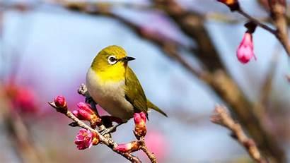 Bird Yellow Birds Wallpapers Walls