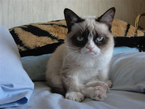 Tard The Grumpy Cat Meme - i had fun once it was awful the life and times of tard the grumpy cat gallery new media