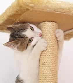 declawing cats alternatives cat declaw alternatives pets go
