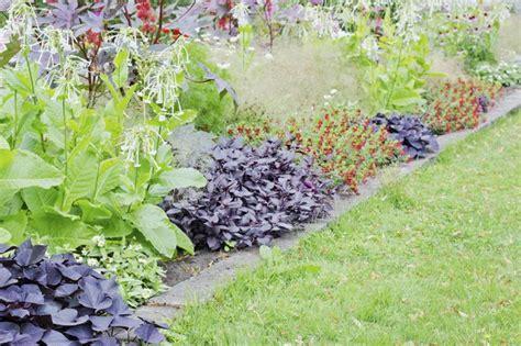 Decorative Potato Plant - how to grow an ornamental sweet potato vine hunker