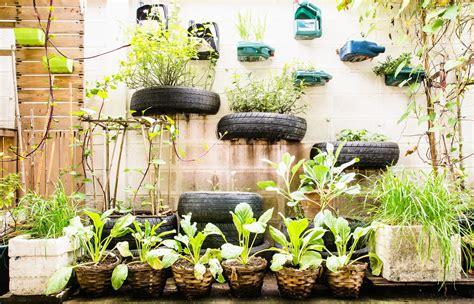 urban gardening  birds celebrate urban birds