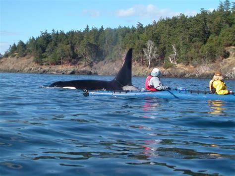 places  kayaking  washington state seattle