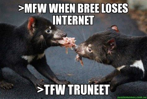 Mfw Meme - gt mfw when bree loses internet gt tfw truneet tasmanian devil aussie memes