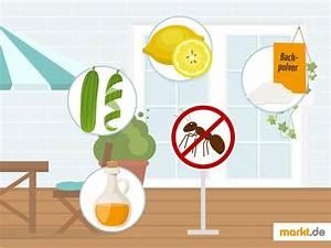 Ameisen Auf Der Terrasse : ameisen im blumentopf cheap ameisen im blumentopf zwei ~ Lizthompson.info Haus und Dekorationen