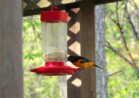 baltimore orioles feeders we are for the birds 187 s chatt