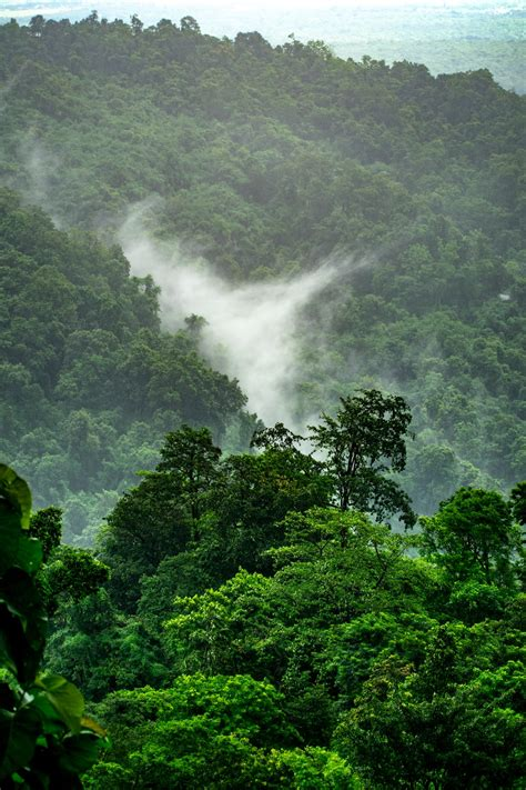 stunning rainforest pictures hd