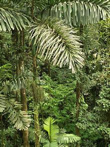parc national yasuni wikipedia