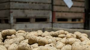 Kartoffeln Und Zwiebeln Lagern : lagerung ~ Markanthonyermac.com Haus und Dekorationen